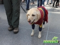 NYCC 2016 Cosplay 13 - Superman Dog