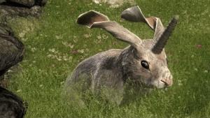 theHunter: Non-Typical Rabbit Release Video Thumbnail